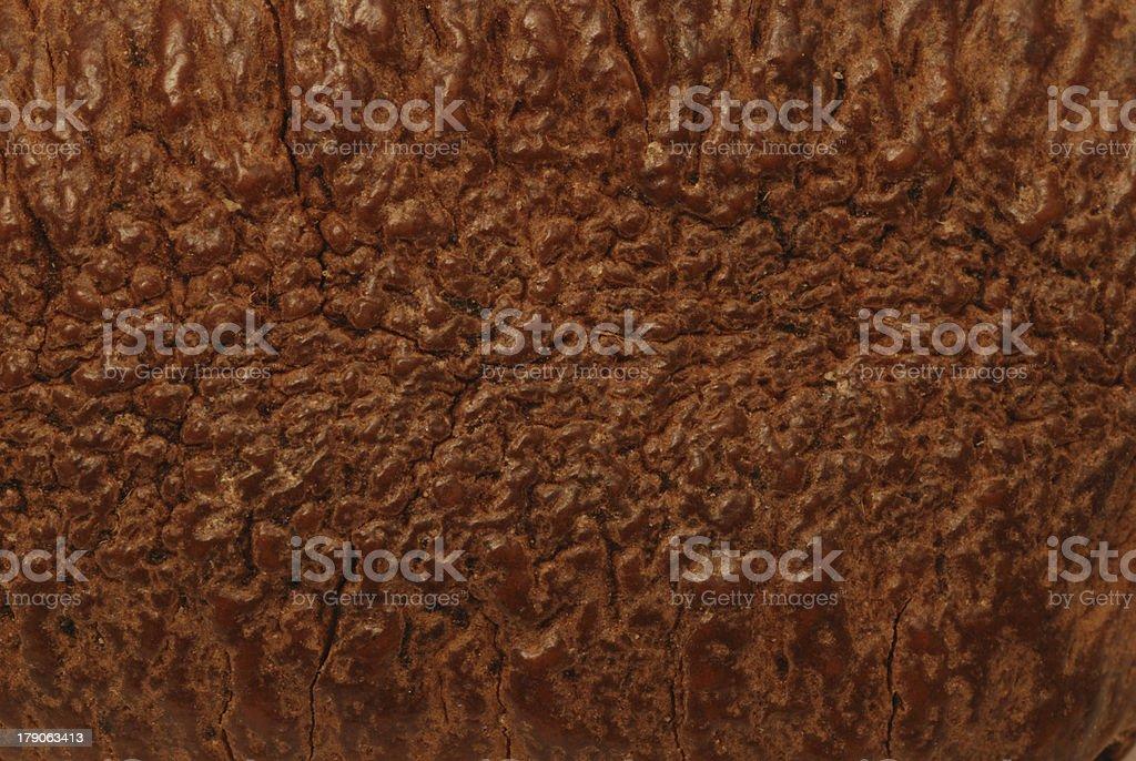 Brazil Nut Shell royalty-free stock photo