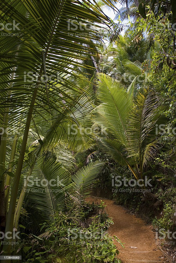 Brazil. Tropical Forest royalty-free stock photo