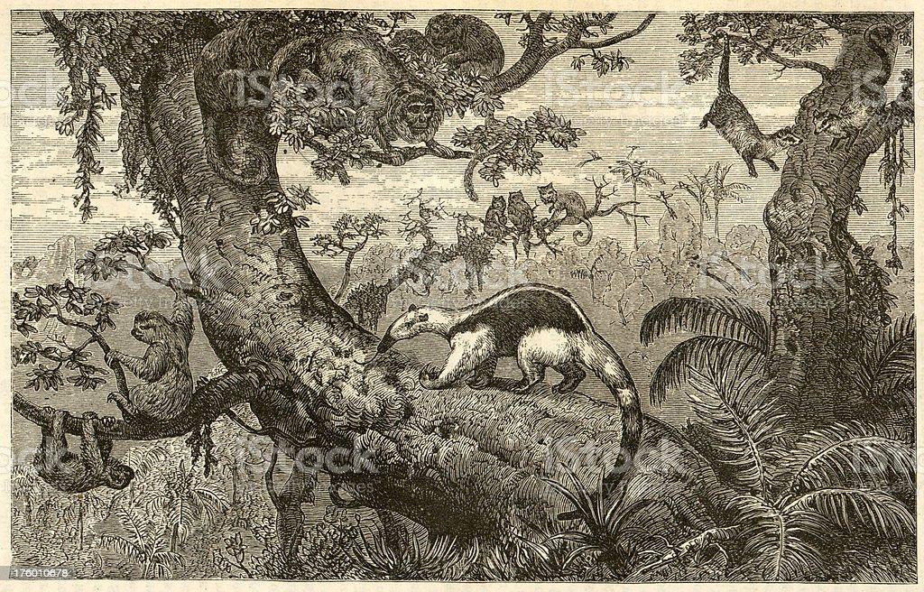 Brazil Wildlife Engrave stock photo