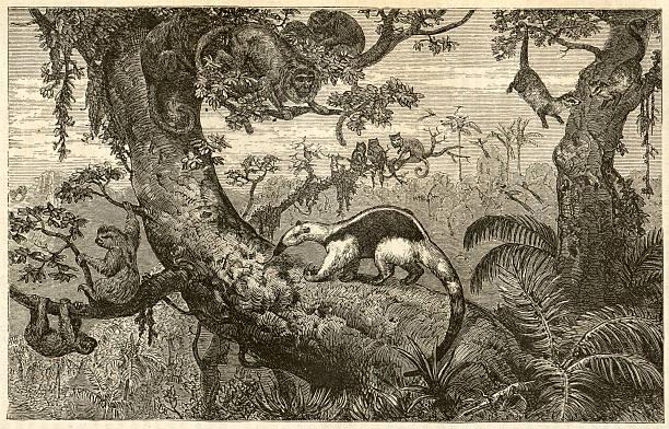 Vida silvestre Engrave Brasil - foto de stock