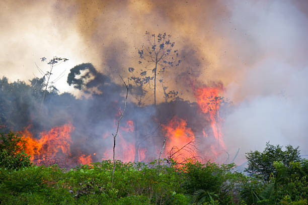 Brazilian Amazon Burning Brazilian Amazon Forest burning to open space for pasture amazon river stock pictures, royalty-free photos & images