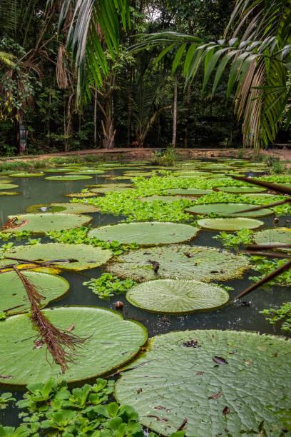 Brazilian Amazon stock photo