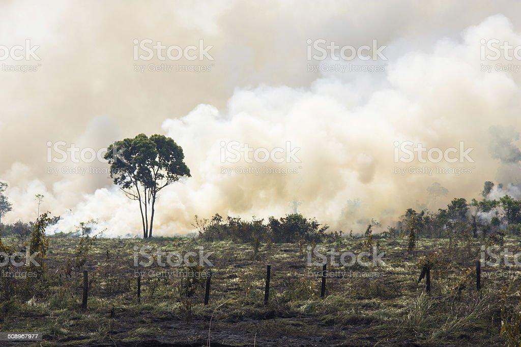 Brazilian Amazonia Burning Amazonia Forest burning to open space for pasture Amazon Rainforest Stock Photo
