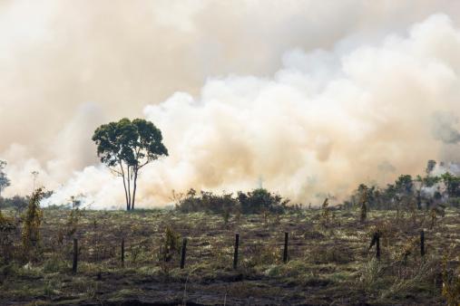 Brazilian Amazonia Burning Stock Photo - Download Image Now