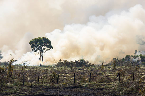 Brazilian Amazonia Burning Amazonia Forest burning to open space for pasture amazon river stock pictures, royalty-free photos & images