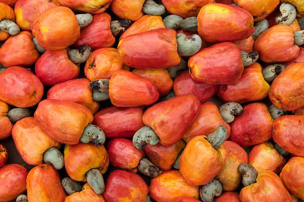 Brazilian cashew fruit stock photo
