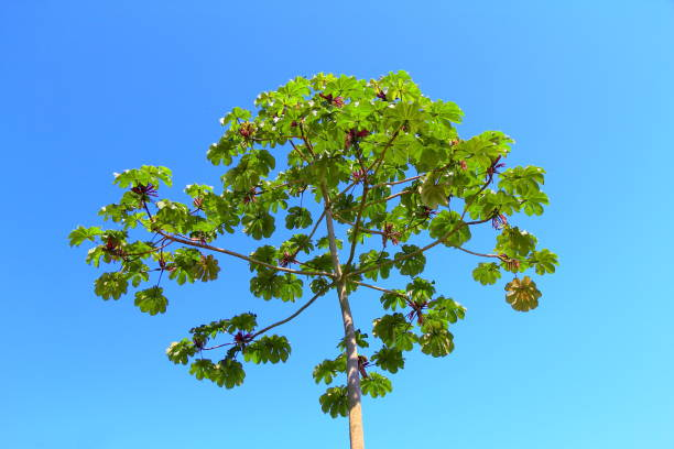 Brazilian exotic tree. stock photo