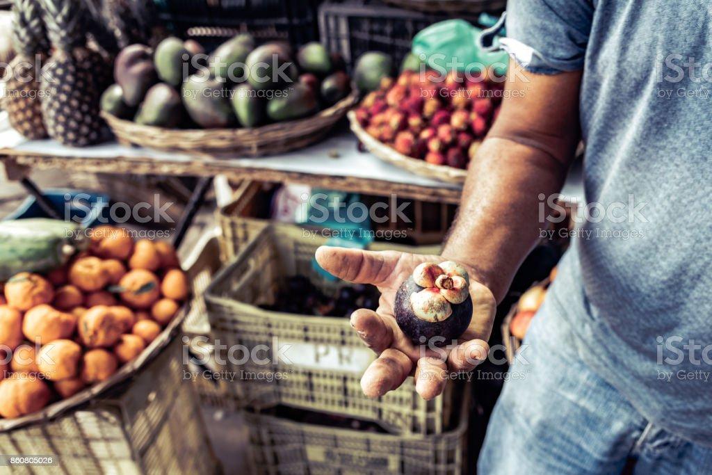 brazilian farmer holding mangosteen fruit in his hand stock photo