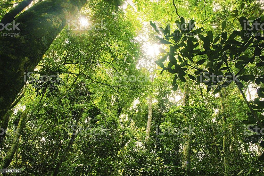 Floresta tropical brasileira - foto de acervo