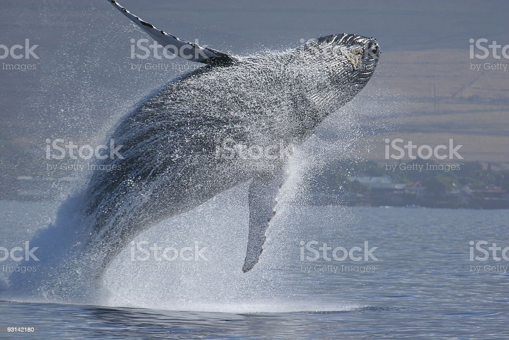 Breach Sequence royalty-free stock photo