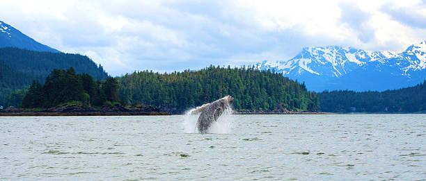Baleine Sauter hors de l'eau - Photo