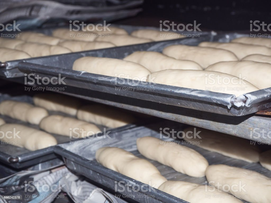 bread process in factory,Bread before entering the oven stock photo