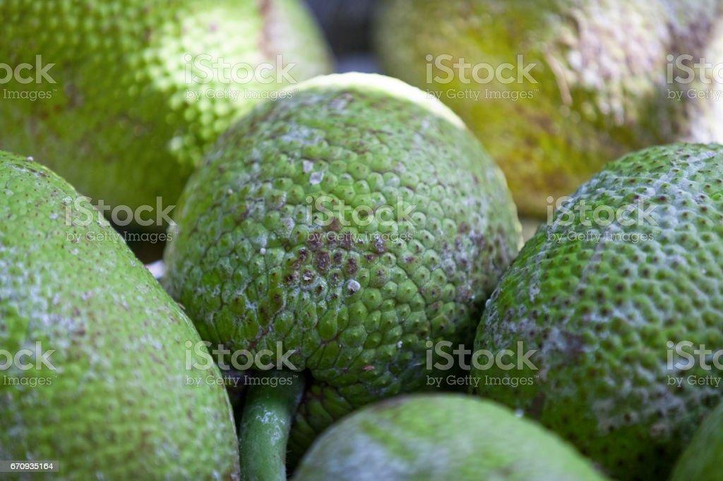 Breadfruits (Artocarpus altilis) stock photo