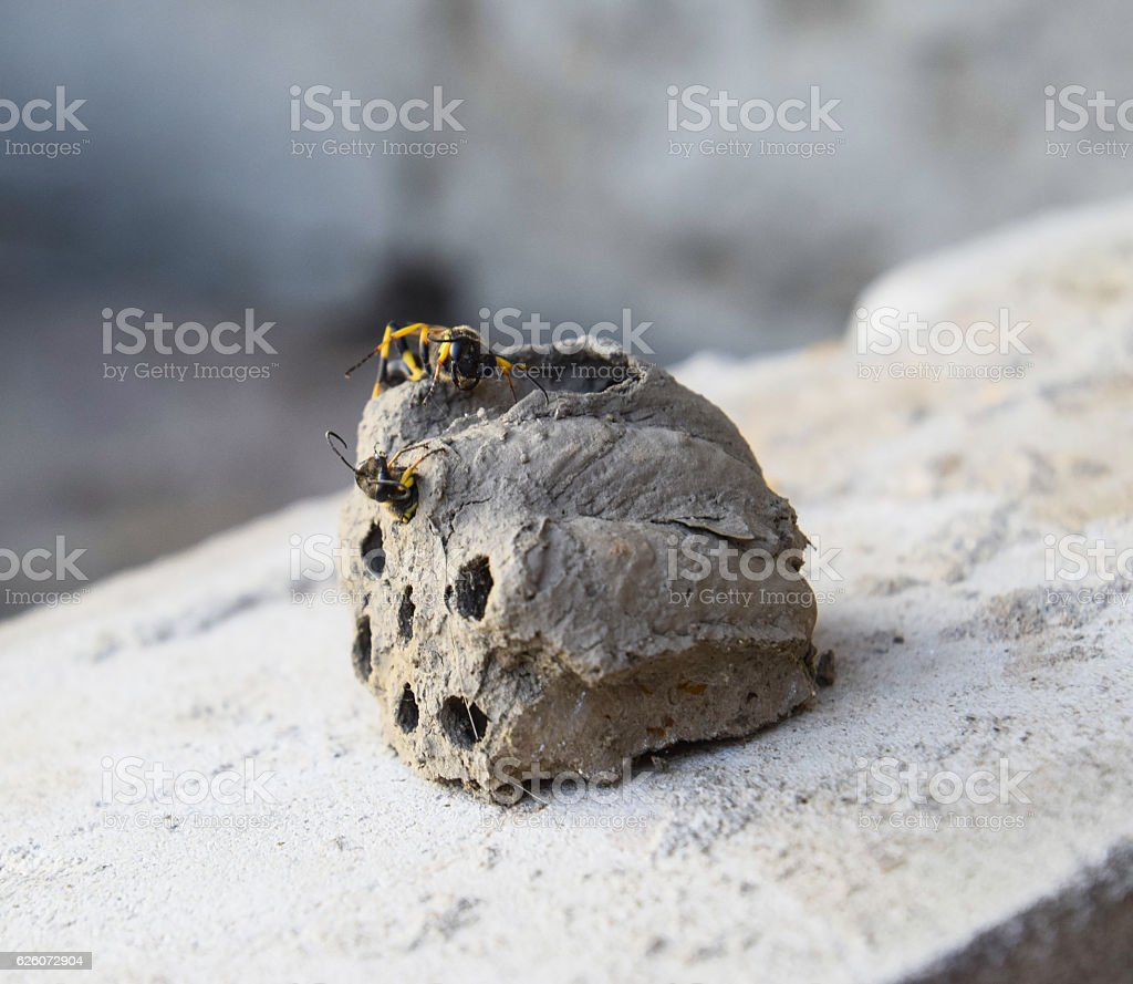 Break a hornet's nest of clay stock photo