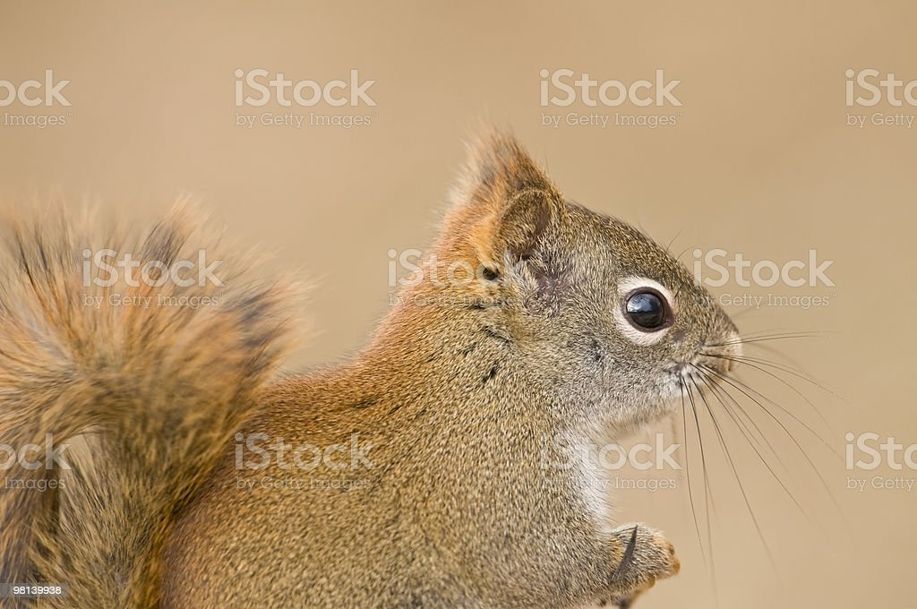 Break from Eating royalty-free stock photo