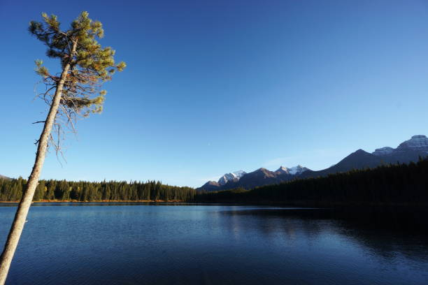 Break in the Canadian Rockies stock photo