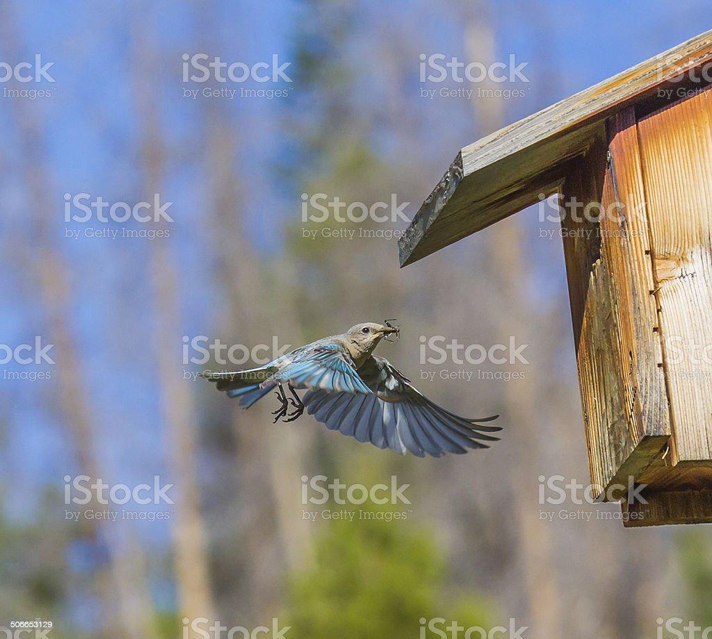 Breakfast Bug stock photo