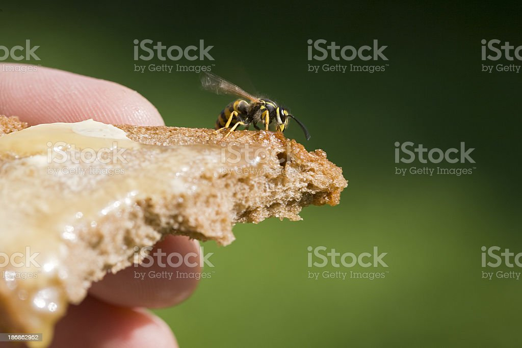 Breakfast Guest stock photo