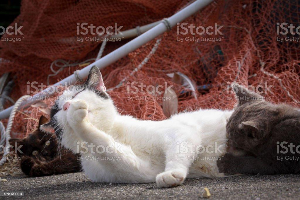 Japan breast feeding cat