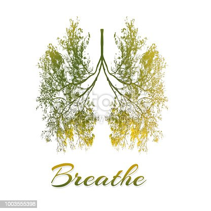 istock Breathe - Lung of trees in concept for health 1003555398