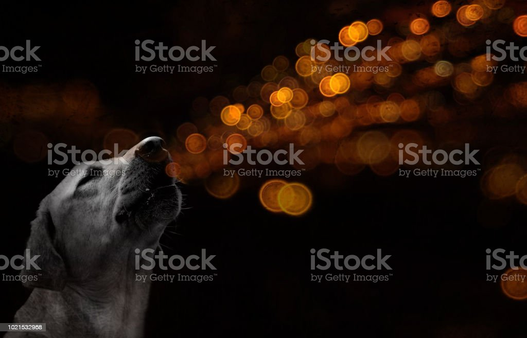 Breathing the city lights stock photo