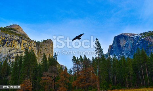 istock Breathtaking hawk flying over Yosemite National Park Monument Valley Half Dome 1297799108
