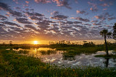 A vibrant sunrise in the beautiful natural surroundings of Orlando Wetlands Park in central Florida.  The park is a large marsh area which is home to numerous birds, mammals, and reptiles.