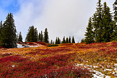 Breathtaking red heathland in the mountains with light snow and conifers, Austria