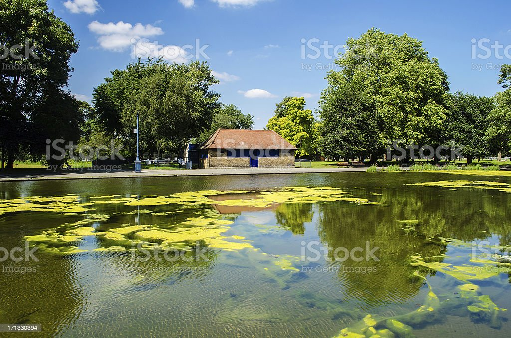 breathtaking scene with lush trees and blue sky royalty-free stock photo