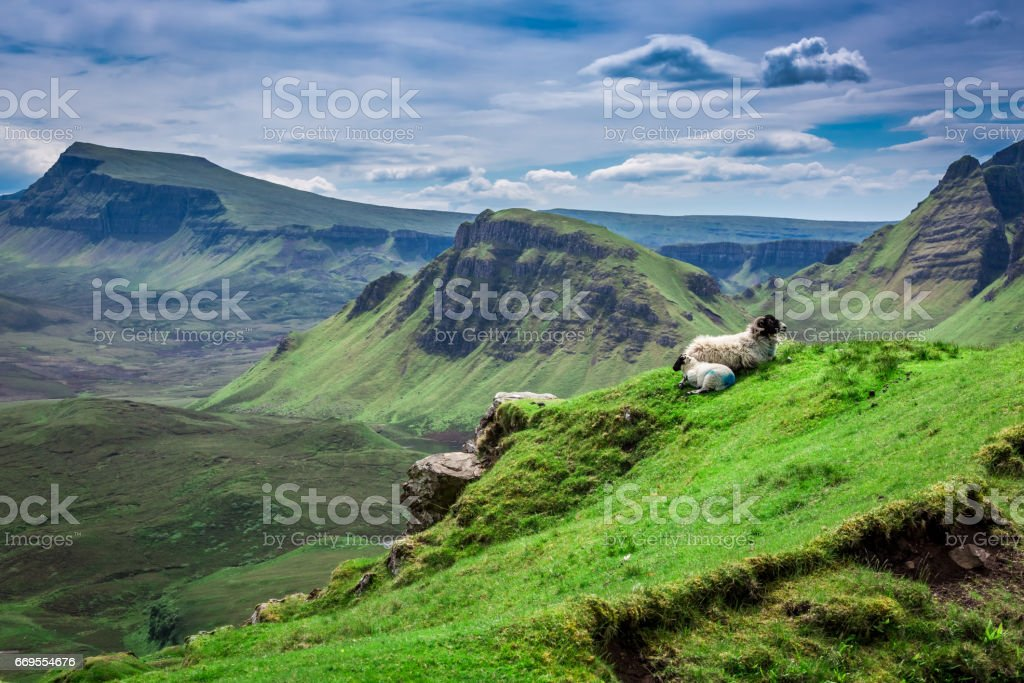 Breathtaking view to sheeps in Quiraing in Scotland stock photo