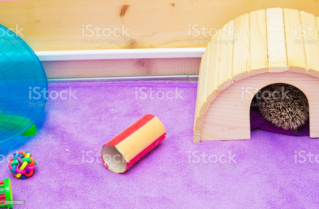 breeding facility for rodent hamster hedgehog mouse stock photo