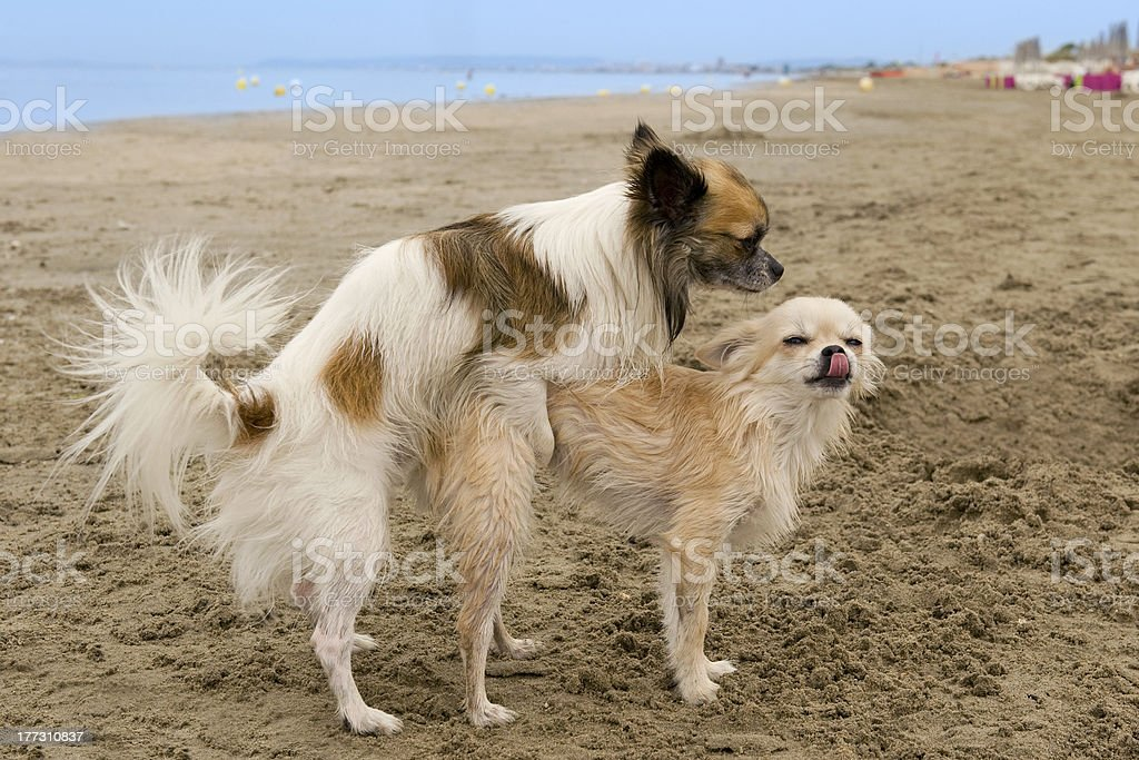 breeding stock photo