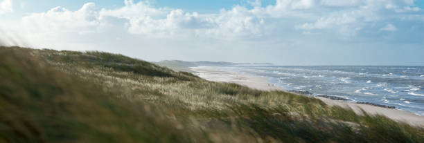 Breezy Beachgrass on Dunes at Hvide Sande (Denmark) with North Sea stock photo
