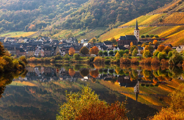 Bremm town and Vineyards in Mosel wine valley at autumn stock photo