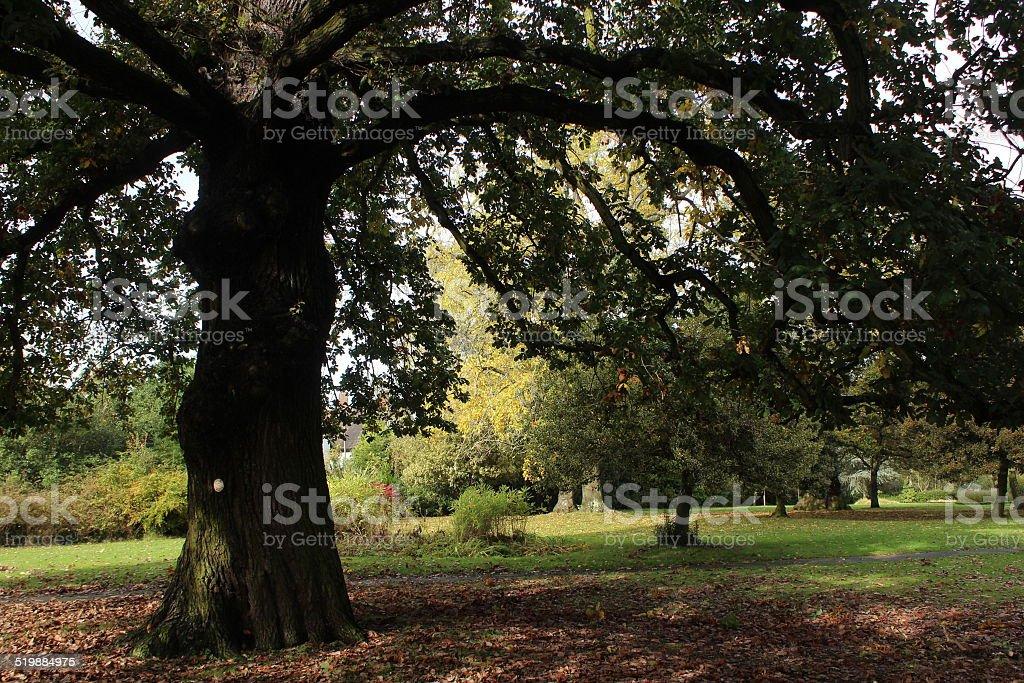 Brentwood Autumn 2014 stock photo