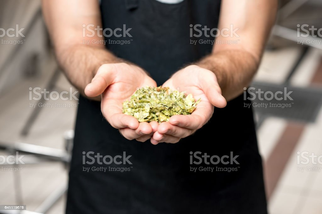 Brewer with hop stock photo