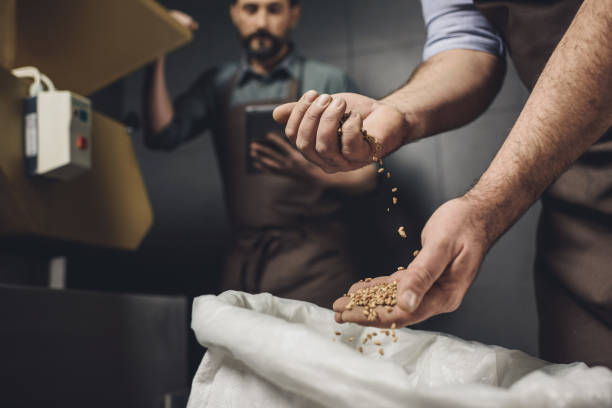 Brewery worker inspecting grains stock photo