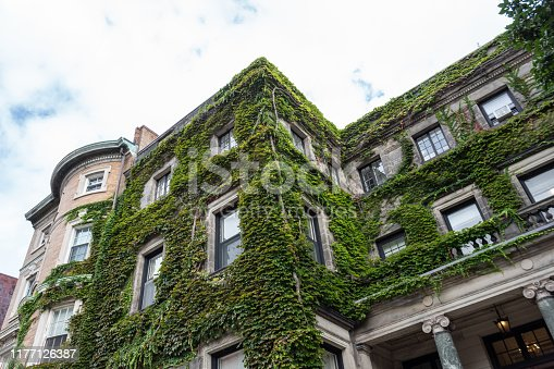Brick and stone residential and office buildings covered in green ivy, horizontal aspect