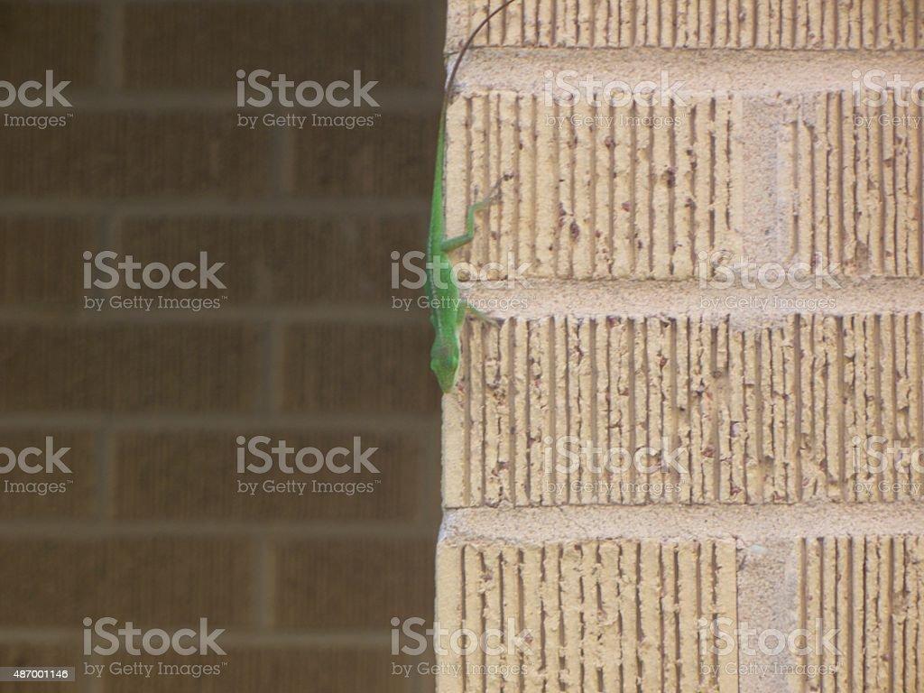 Brick Lizard stock photo