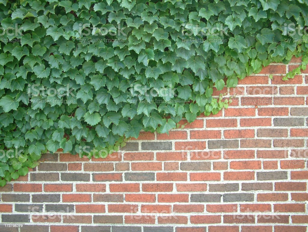 Brick N Vine royalty-free stock photo