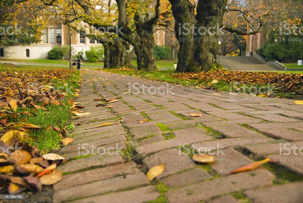 Brick path in the quad at University of Washington royalty-free stock photo