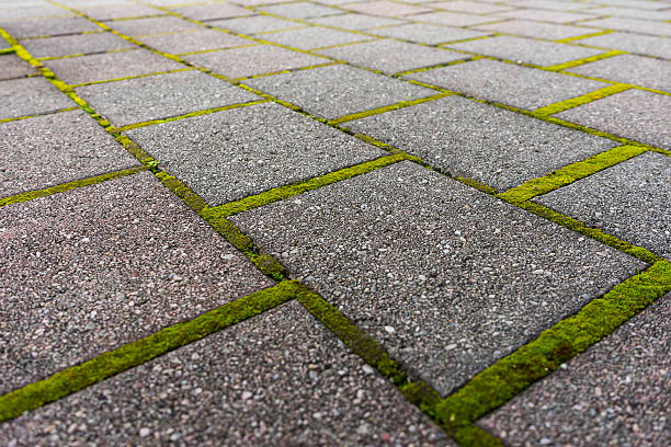 Brick pathway with green moss stock photo