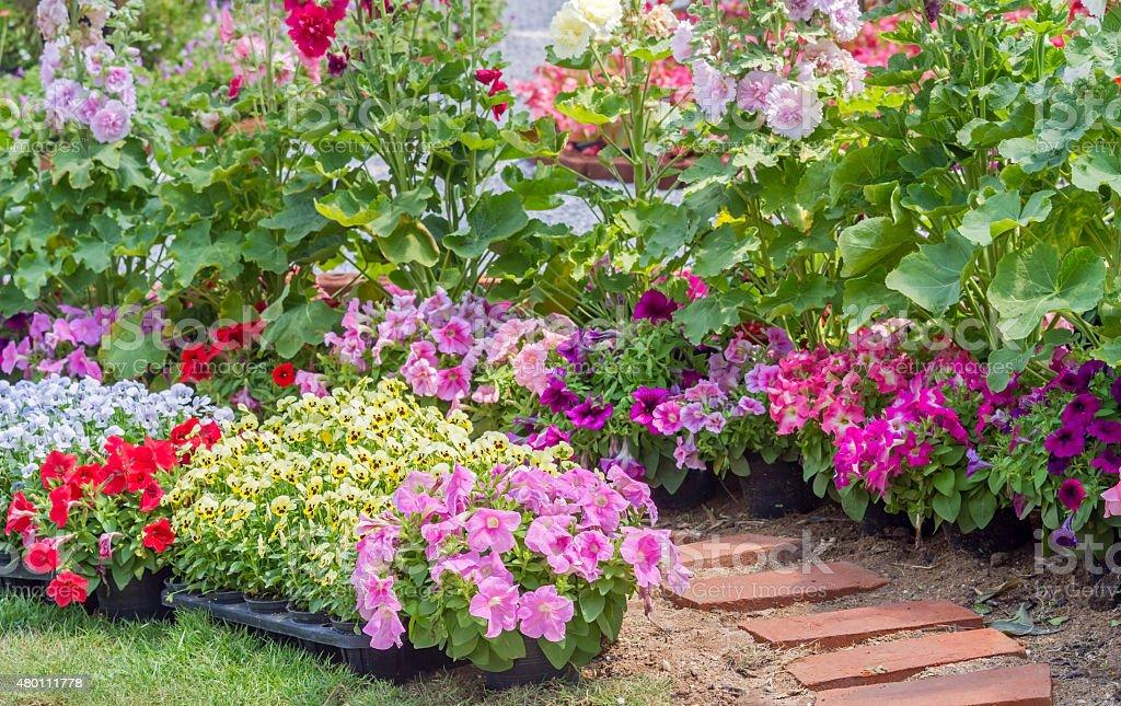 Brick walkway in flower garden stock photo