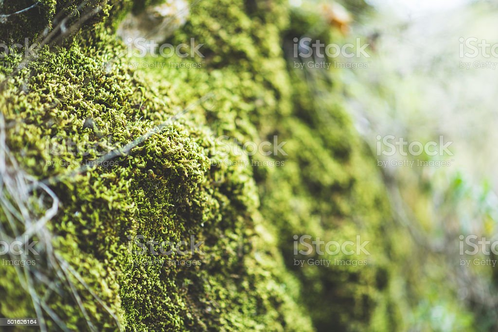 Brick wall and moss stock photo