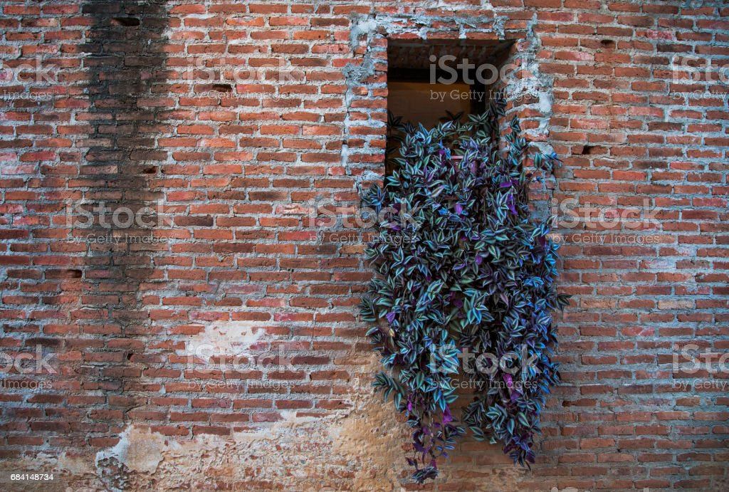 Brick wall and window with ivy Lizenzfreies stock-foto