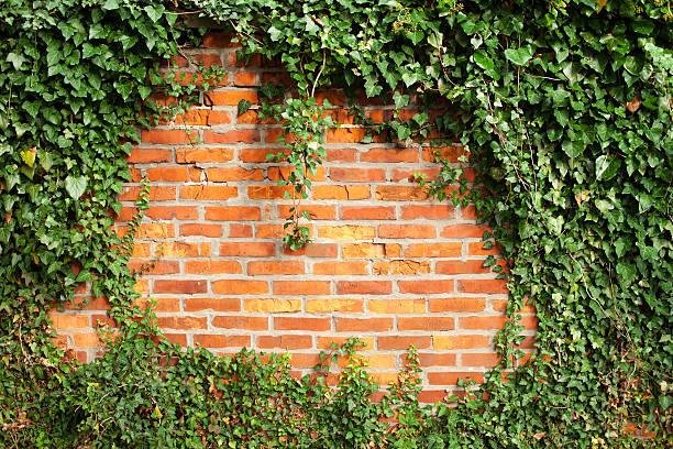 Wand von ivy – Foto
