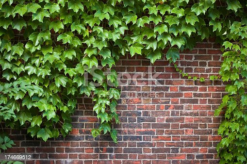 brick wall covered in ivy
