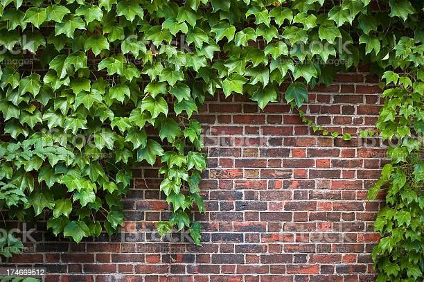 Brick Wall Covered In Ivy Stockfoto en meer beelden van Architectonisch element