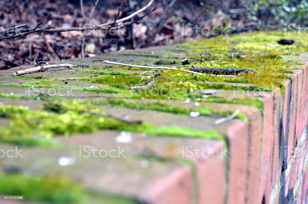 brick wall covered with moss stock photo