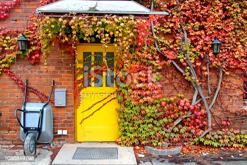 istock Brick wall of a residential house overgrown with grapes with leaves of autumn tones. 1086849798